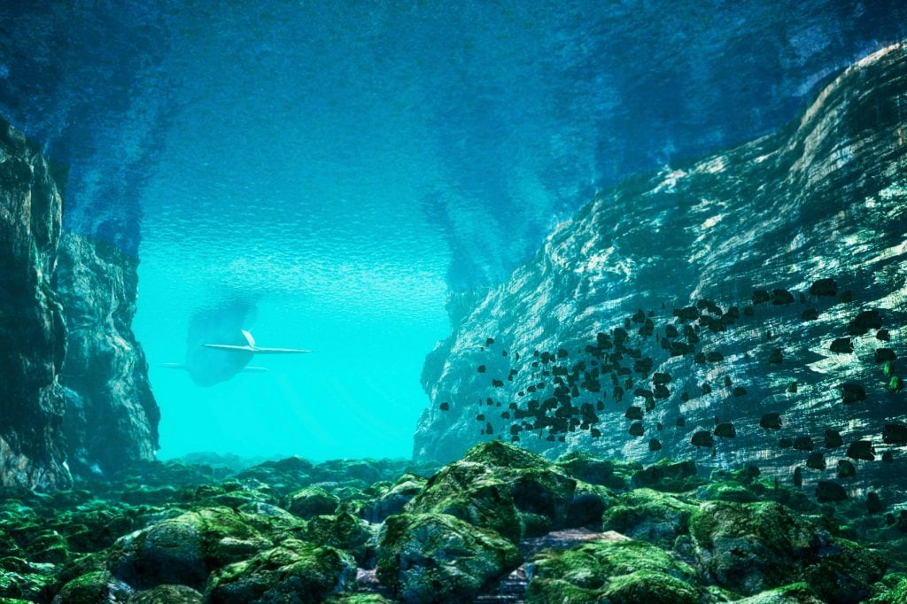 An underwater canyon