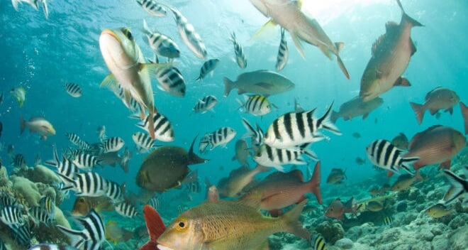 triopical fish swimming in the ocean