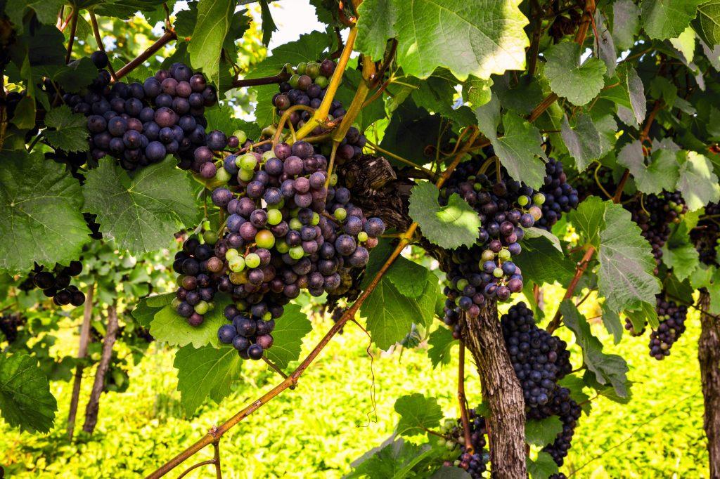 Italy's Wine Regions