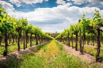 Barossa Wine Region