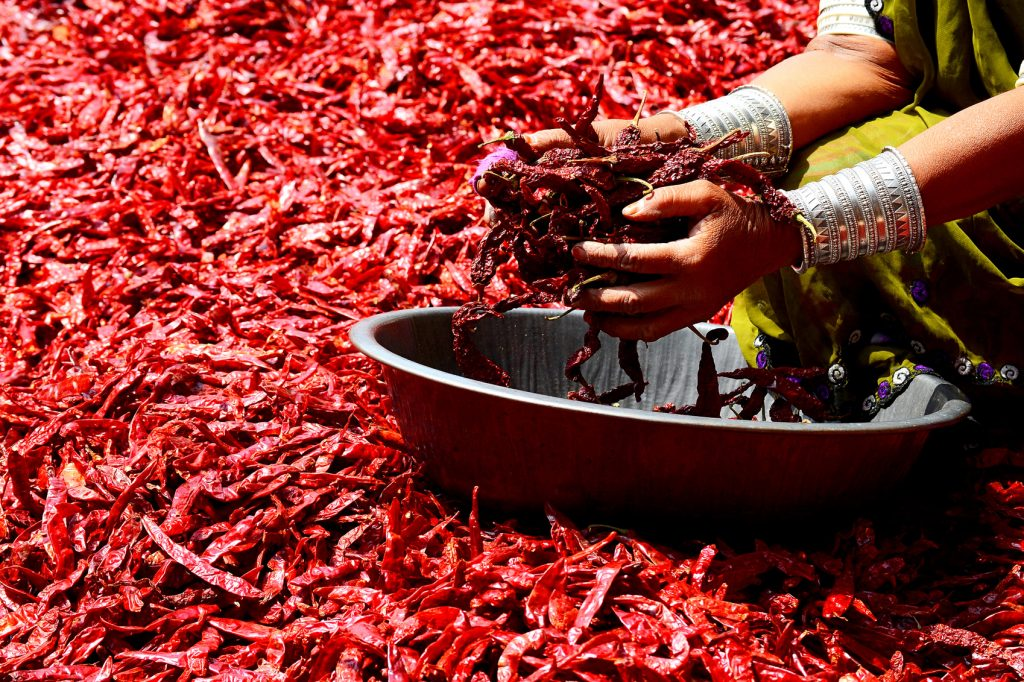 Indian woman washing chilies, an ingredient for International cuisine