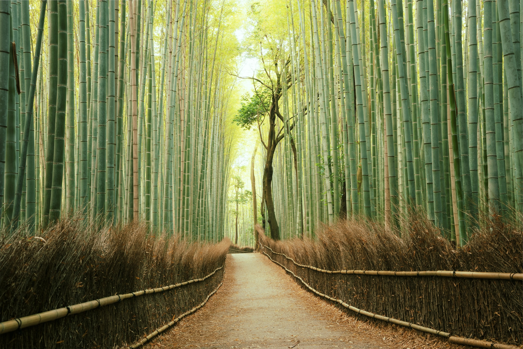Beautiful Japanese Landscapes That Will Make You Want To Visit Now Real Word