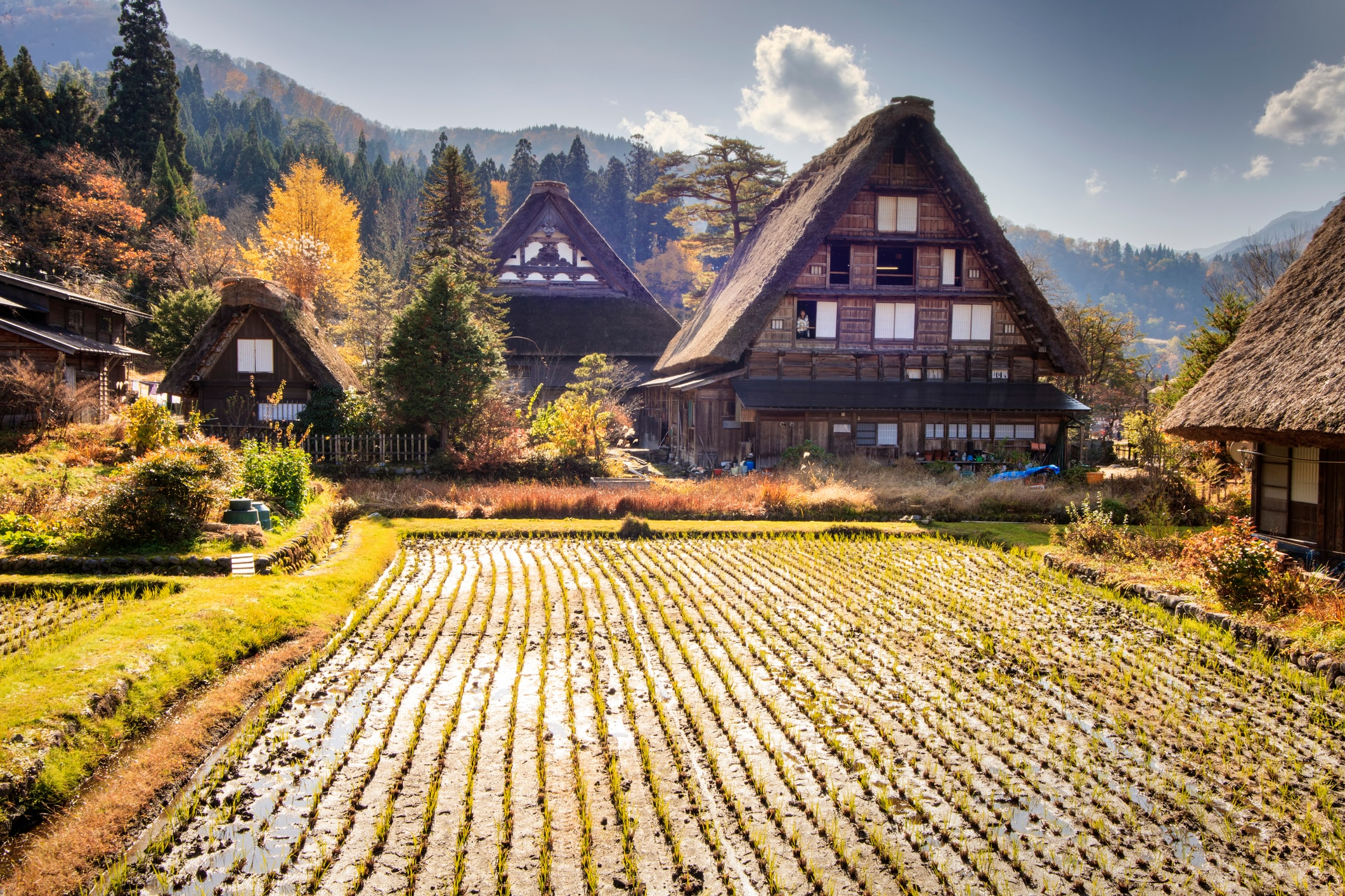 Beautiful Japanese landscapes Traditional and Historical Japanese village Ogimachi - Shirakawa