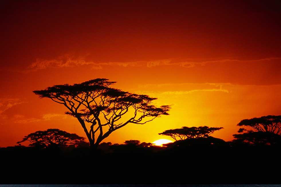 Tanzania Arusha camp serengeti safari