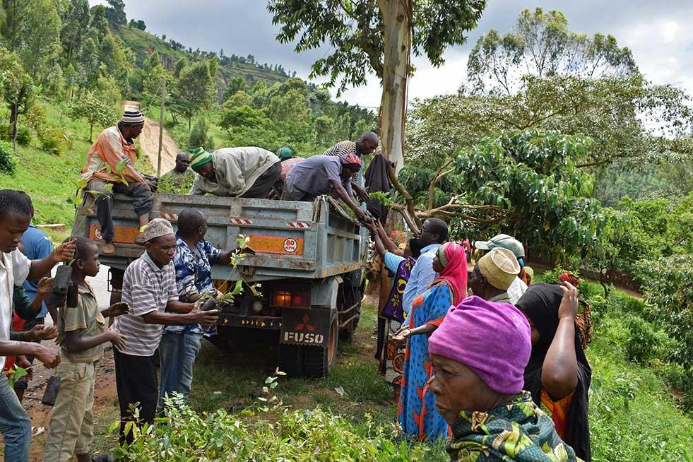 tanzania kilimanjaro one tree planted