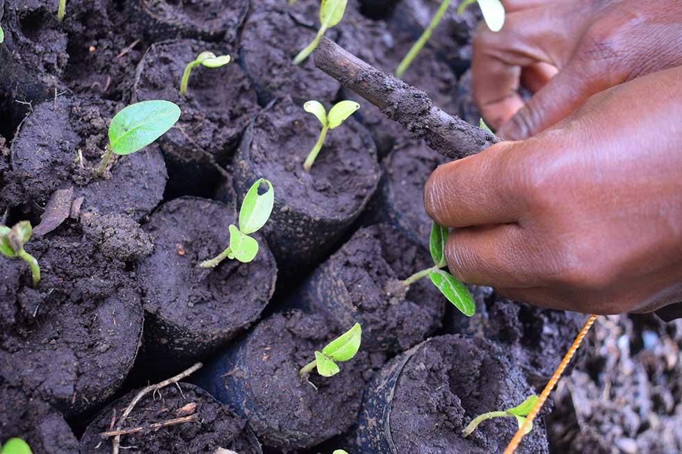 One Tree Planted saplings Tanzania reforestation