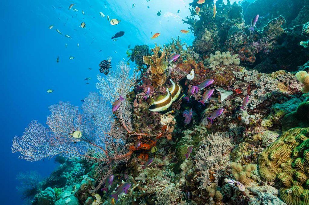 coral reef great barrier reef