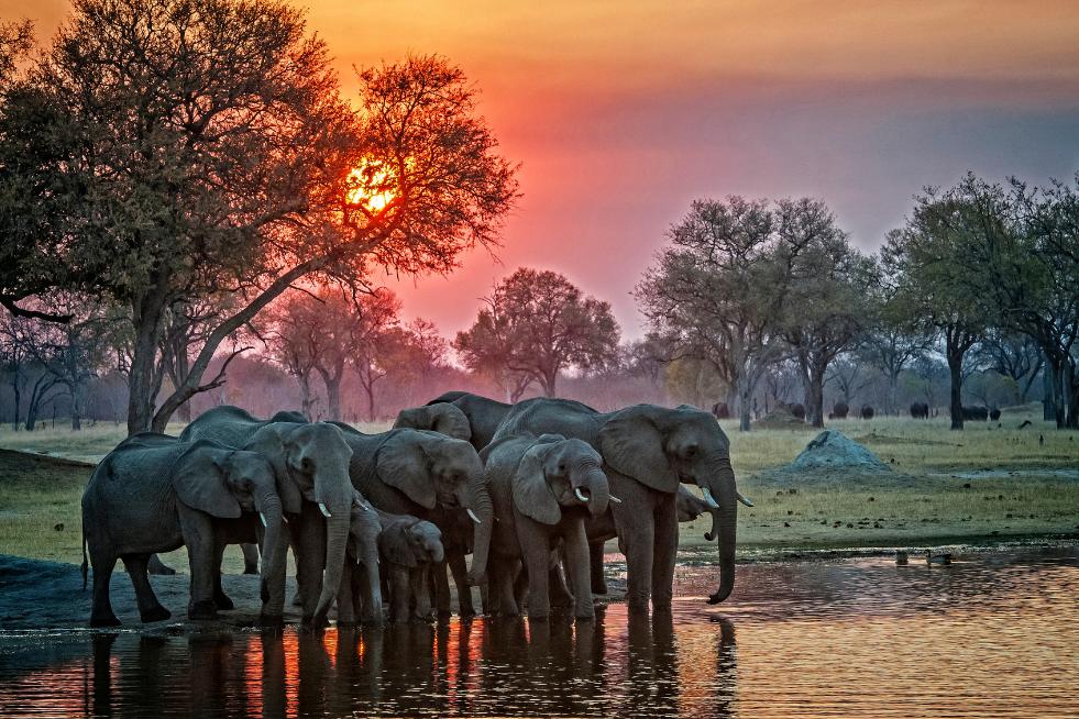 elephantssss most memorable African experiences