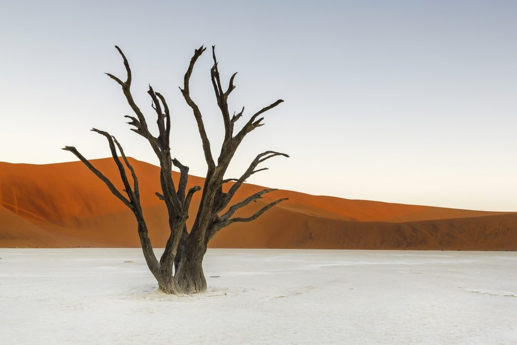 if you're wondering where to travel in 2020 head to Deadvlei, Namibia