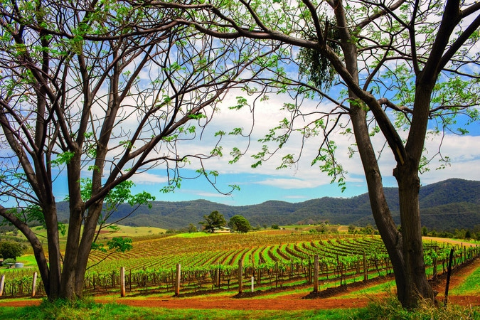 barosssa valley vineyard