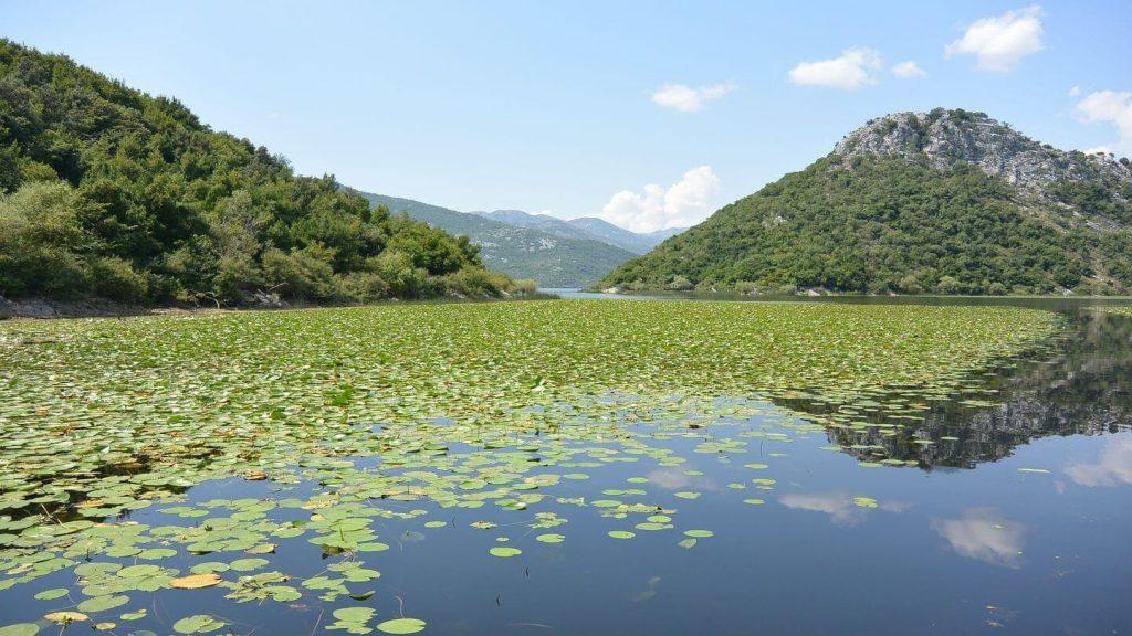 lilly covered Lake Skadar Montenegro