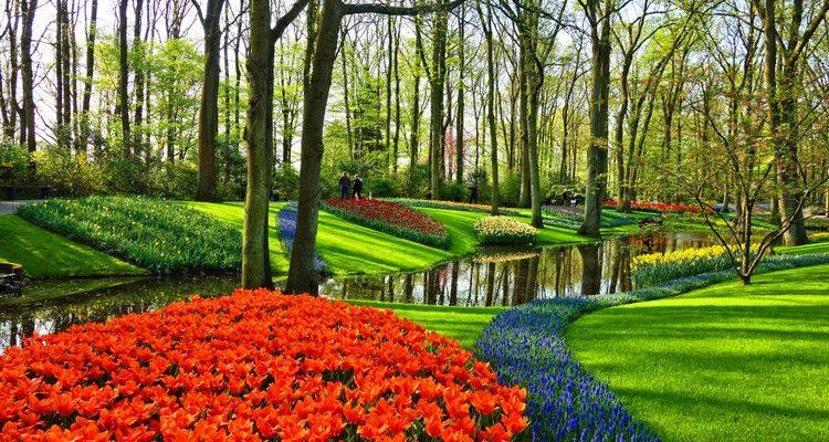 Keukenhof Park tulip garden Netherlands