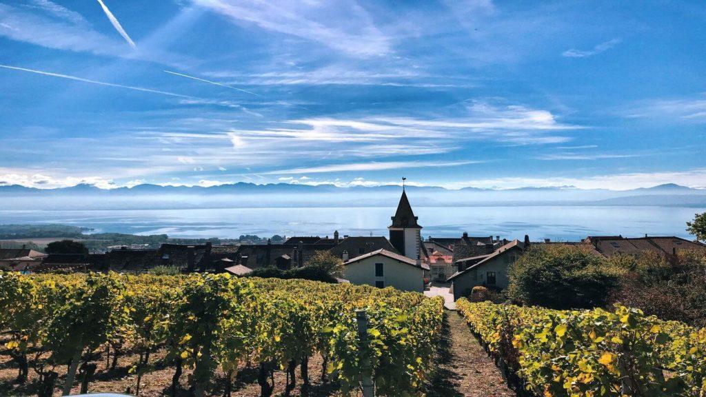 vineyards bougy villars switzerland