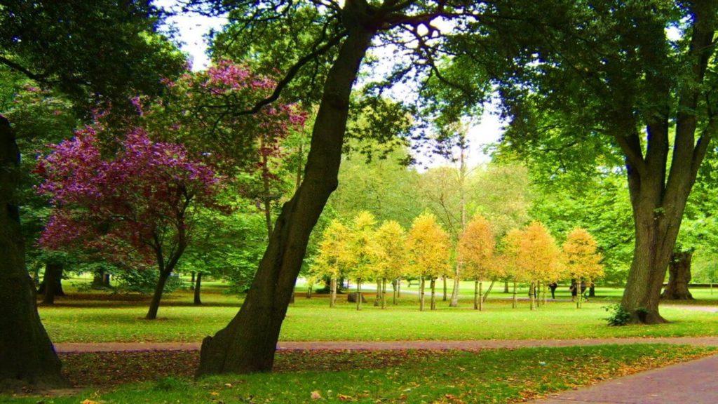 lush garden bute park cardiff