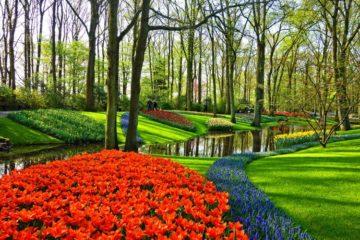 keukenhof-park-tulips-lisse-netherlands