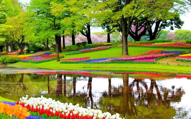 keukenhof park tulips lisse netherlands