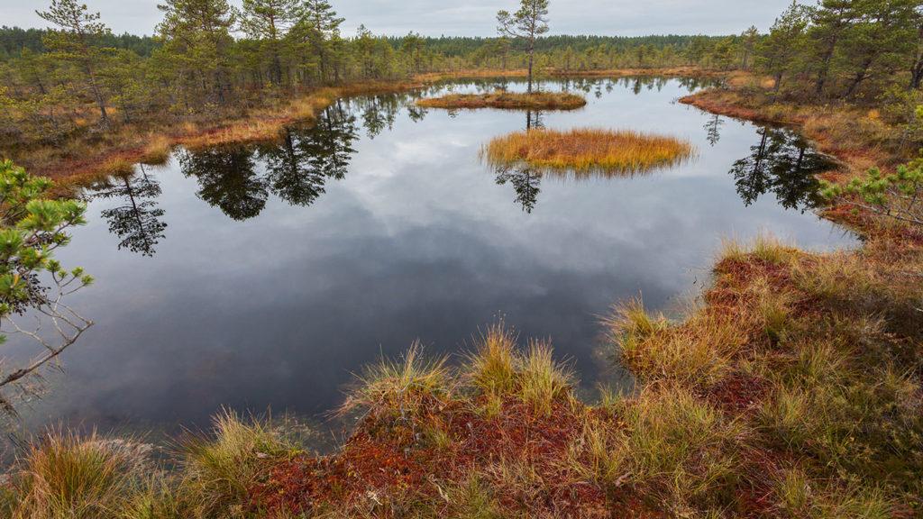 Open water in Lahemaa National Park
