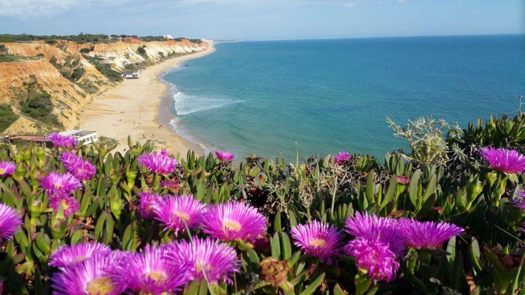 pink flowers portugal beach europe spring break