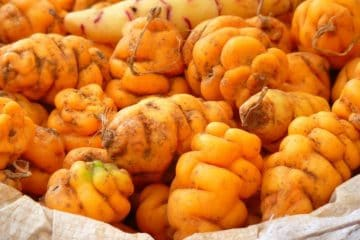 yellow peruvian potatoes