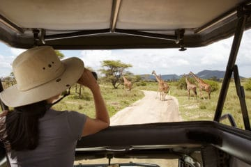 Person snapping a picture of giraffe from a game drive