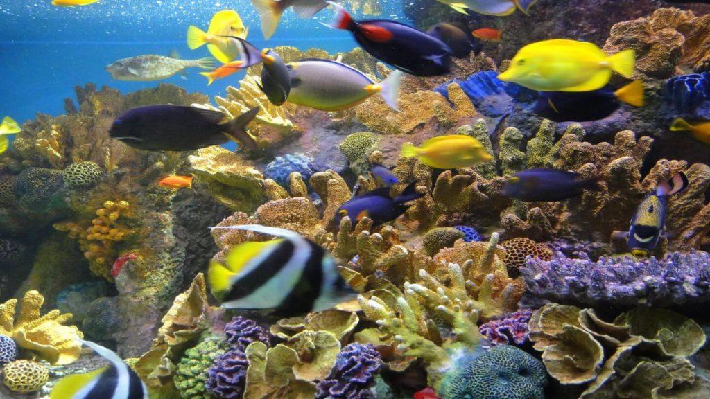 coral fish display new england aquarium
