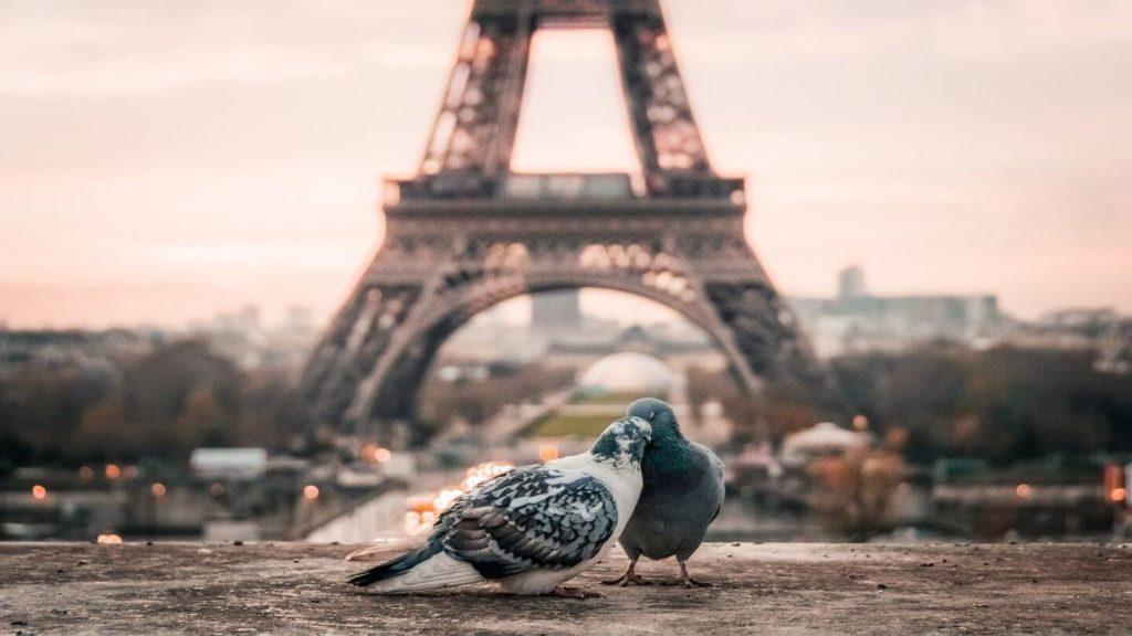 two birds eiffel tower paris