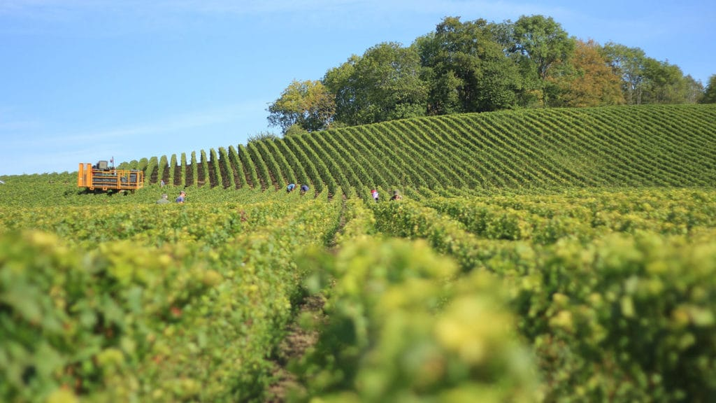winery - bulgaria