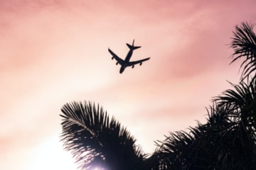 plane flying in front of pink sunset and palm tree