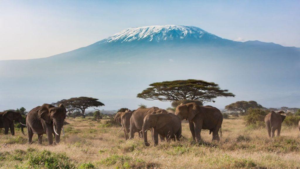 elephants mount kilimanjaro tanzania