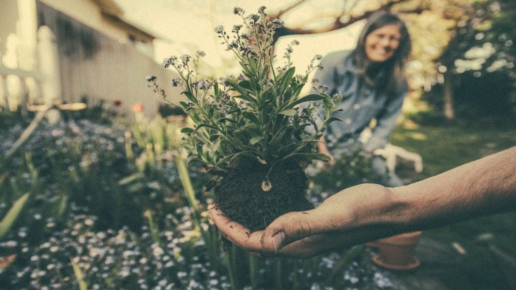 gardening holding plants