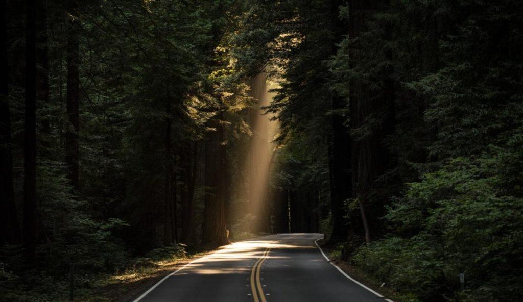 Sun shines through trees, hopeful horizon