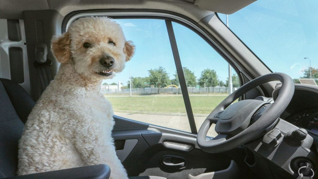 dog sitting in car driver's seat domestic travel