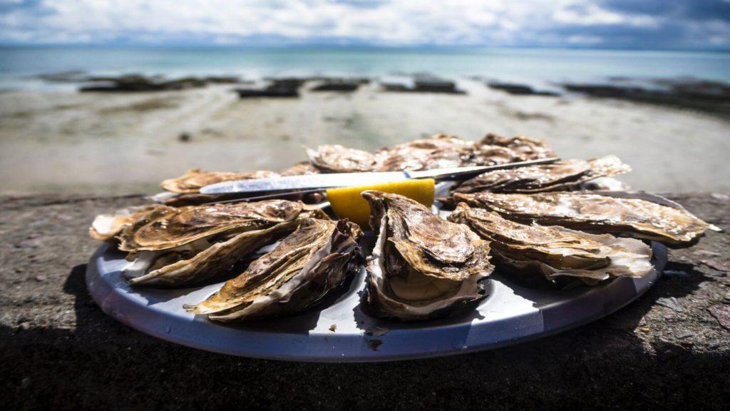fresh oysters on the beach bay of fires tasmania
