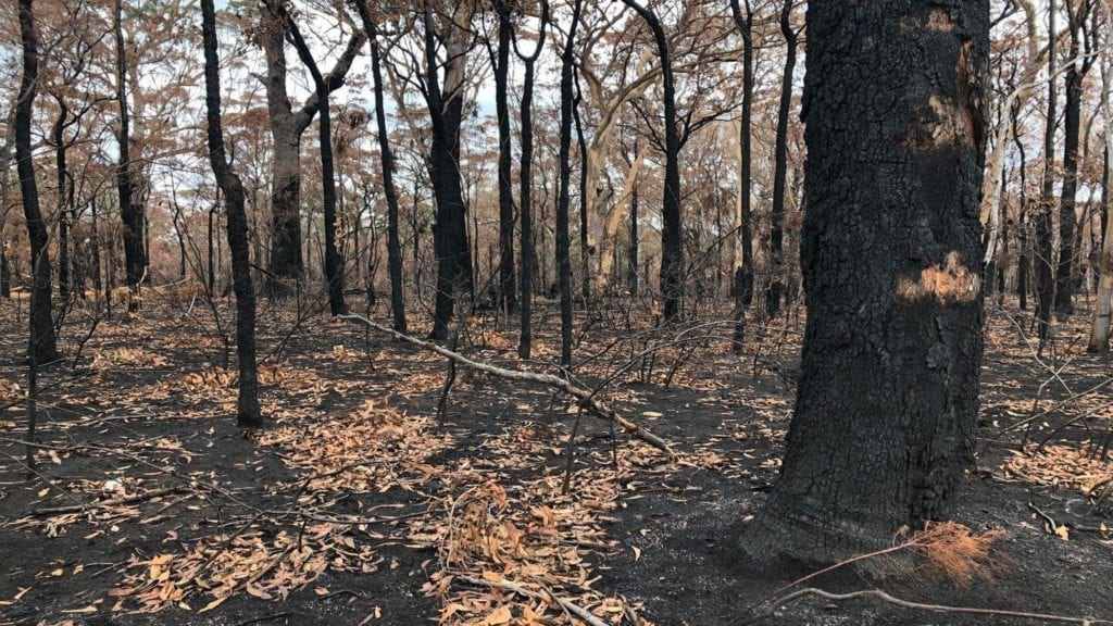 burnt bush landscapes Australia