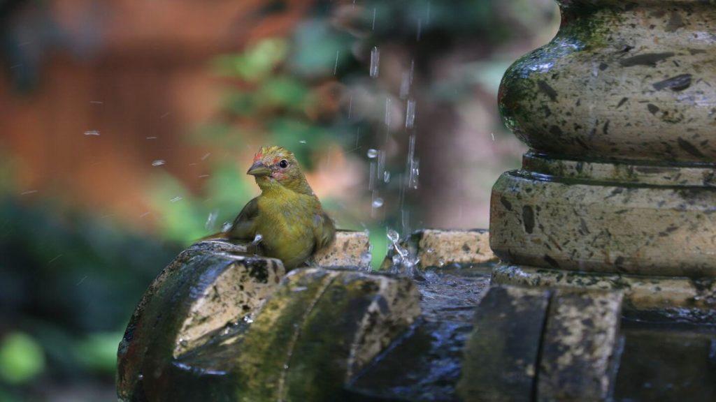 bird bathing water fountain