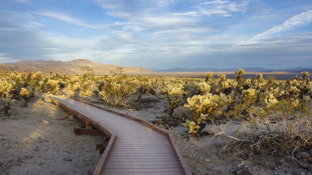 boardwalk trail through cactus garden Joshua Tree National Park