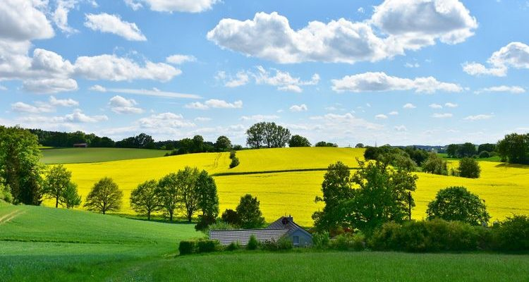 green and gold fields rural landscape