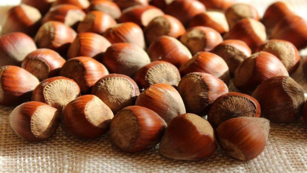bunch of hazelnuts unique New Zealand experiences