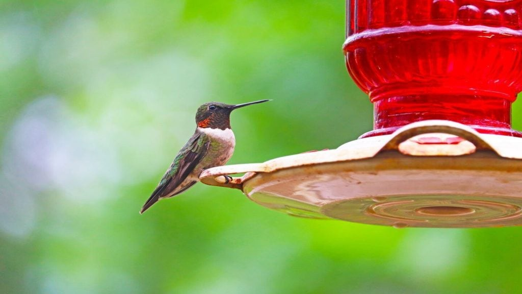 hummingbird feeder backyard reconnect with nature
