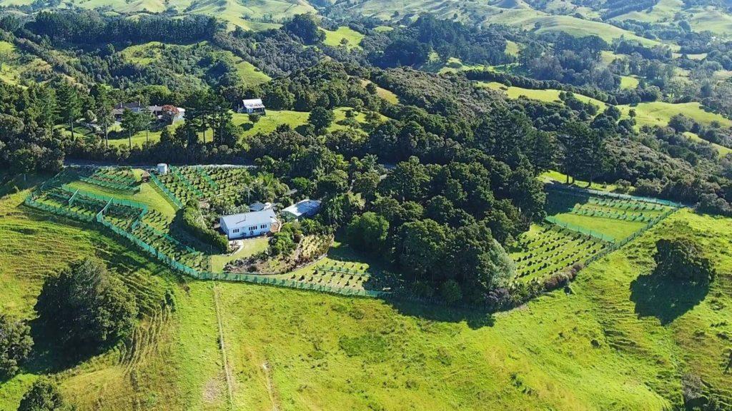 Pekerau Hills Coffee Farm local businesses in New Zealand