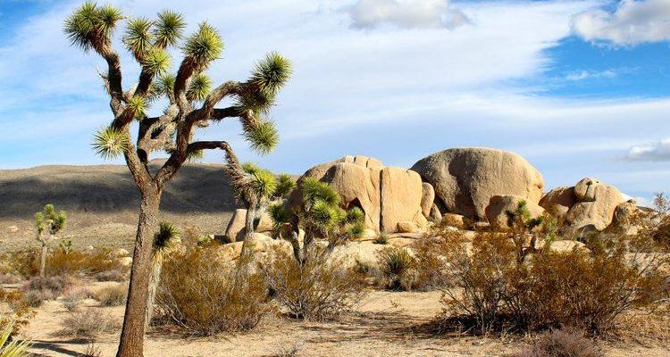 joshua trees rock formations joshua tree national park usa