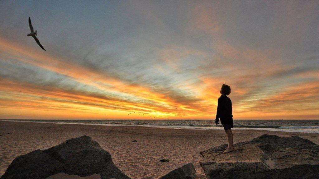 child watching bird flying over beach sunset