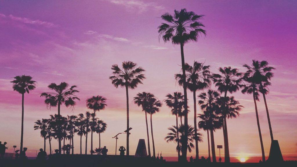 tropical palm trees purple sunset Miami USA