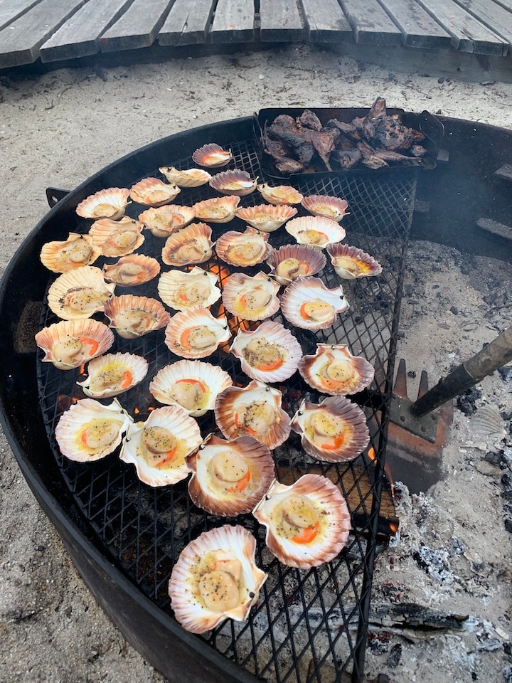 fresh scallops on the barbecue Bay of Fires