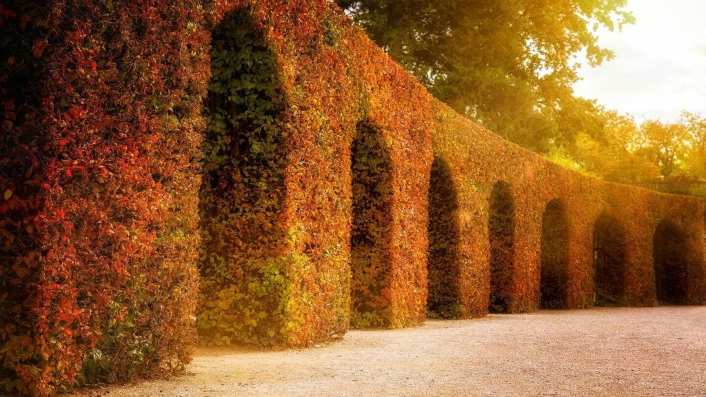 golden light and autumn foliage hanging over arches