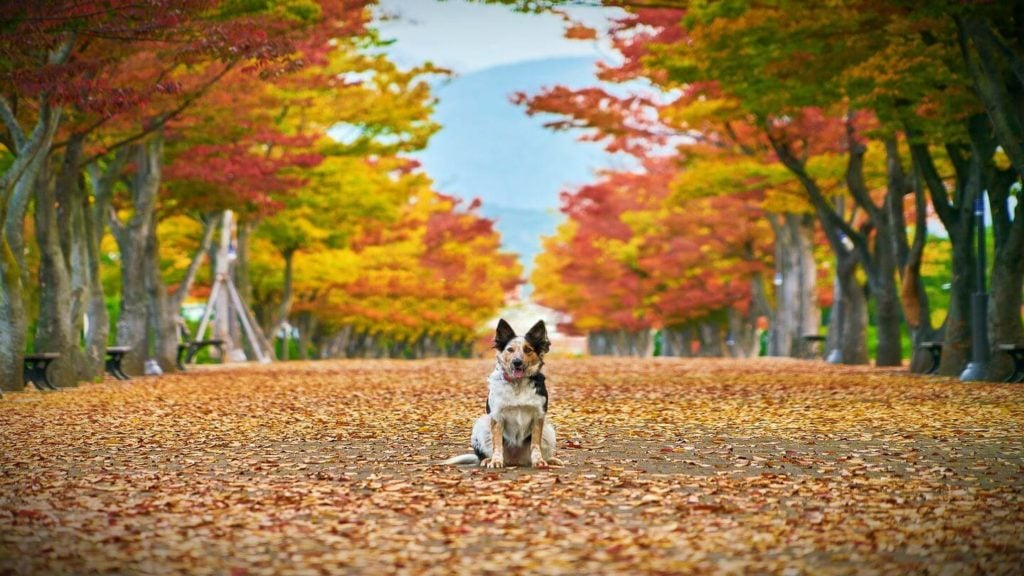dog sitting among autumn leaves travel in fall