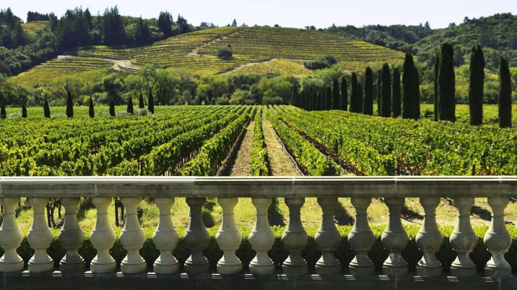 vineyard Napa Valley California USA travel bucket list
