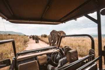 12 online safaris where animals are taking back the wild