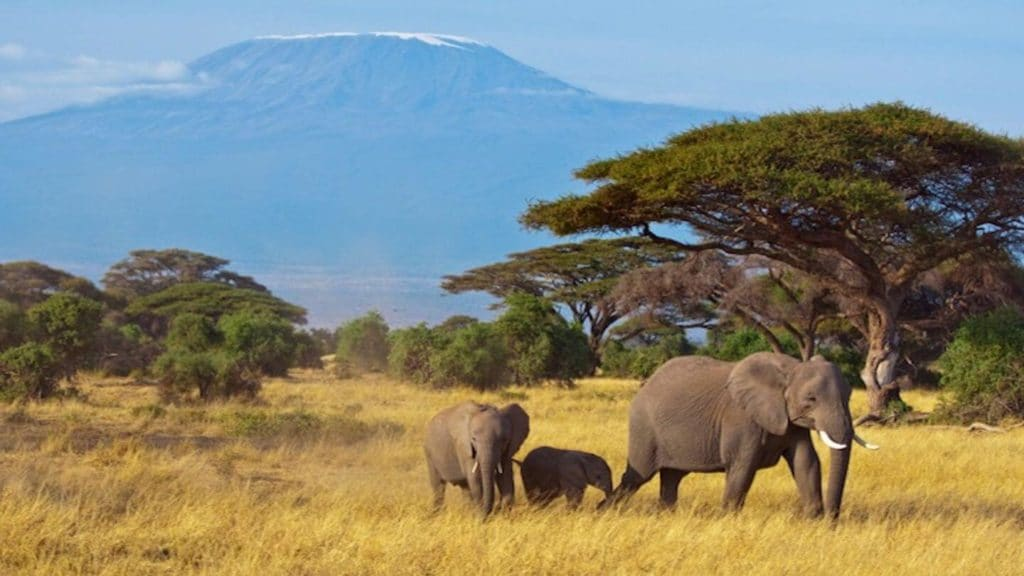 family of elephants in front of Mount Kilimanjaro Tanzania Africa