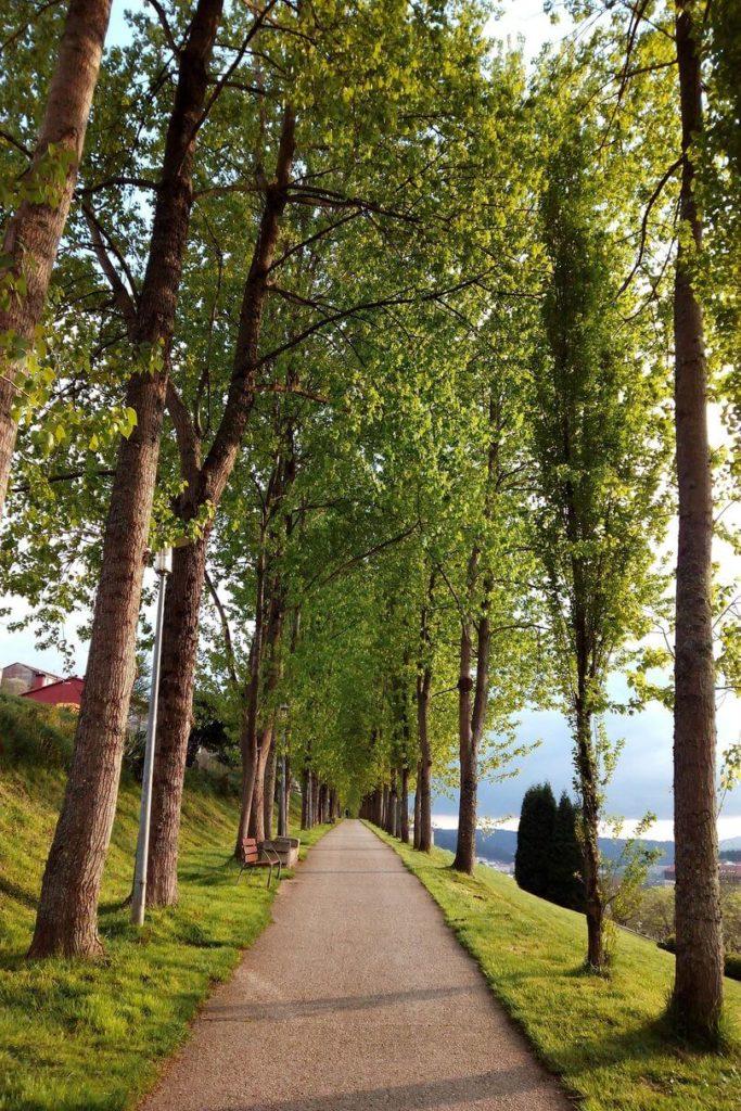 tree lined pathway to Santiago de Compostela Spain